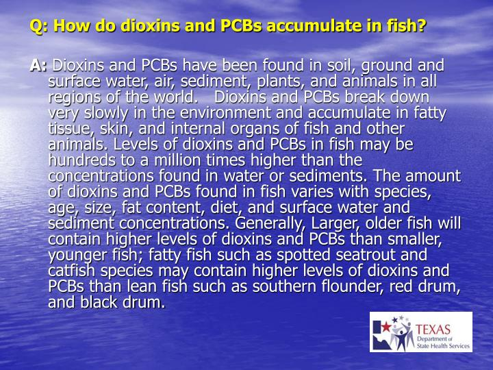 Q: How do dioxins and PCBs accumulate in fish?