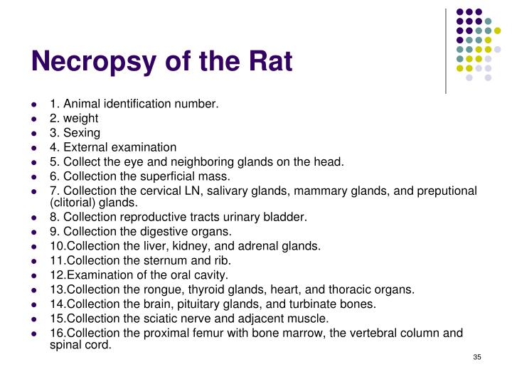 Necropsy of the Rat