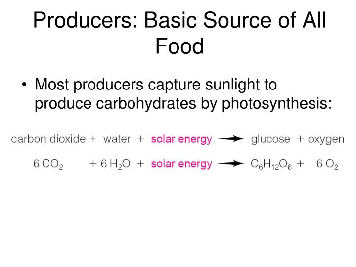 Producers basic source of all food