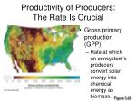 productivity of producers the rate is crucial