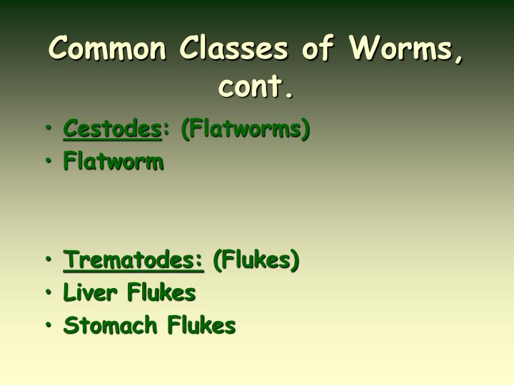 Common Classes of Worms, cont.