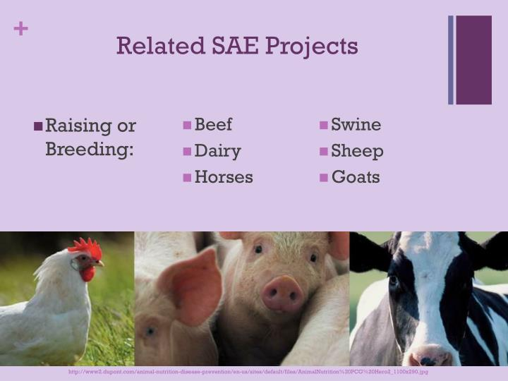 Related SAE Projects