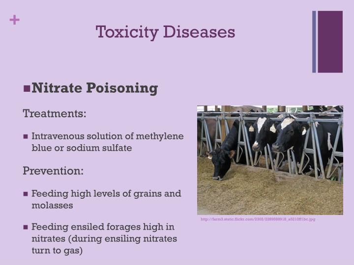 Toxicity Diseases