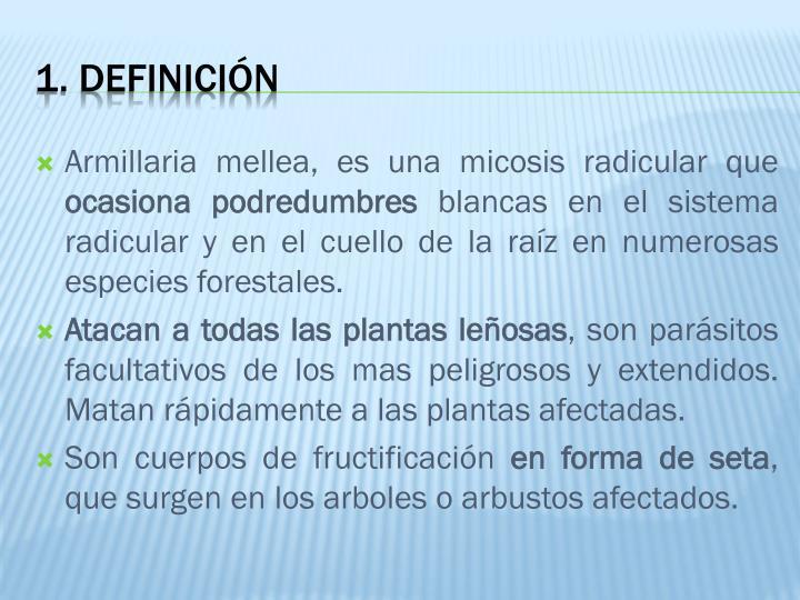 Armillaria mellea, es una micosis radicular que