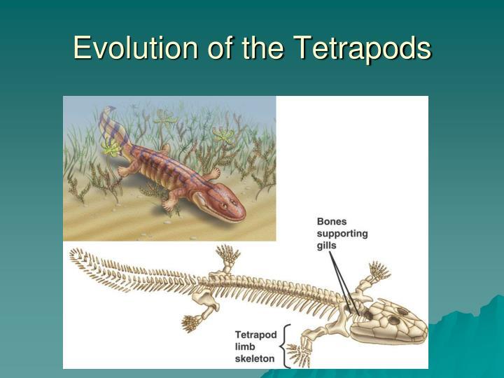 Evolution of the Tetrapods