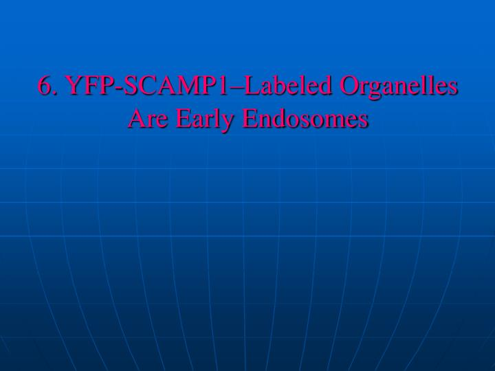 6. YFP-SCAMP1–Labeled Organelles Are Early Endosomes