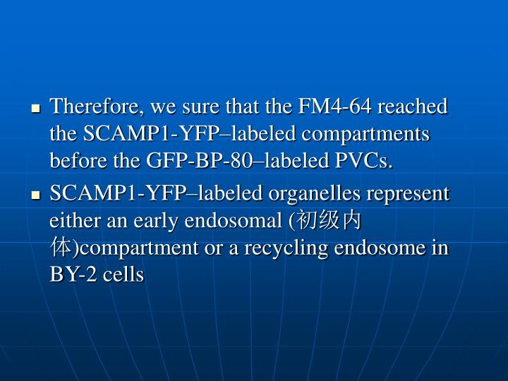 Therefore, we sure that the FM4-64 reached the SCAMP1-YFP–labeled compartments before the GFP-BP-80–labeled PVCs.
