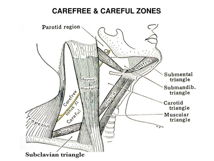CAREFREE & CAREFUL ZONES