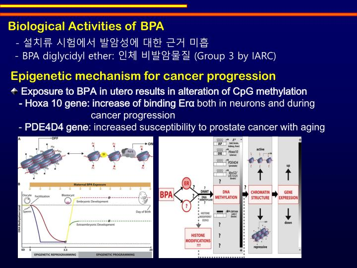 Biological Activities of BPA