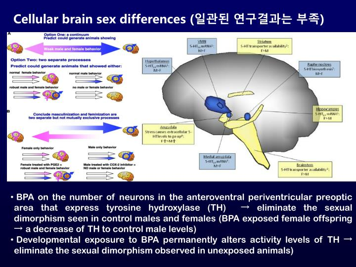 Cellular brain sex differences (