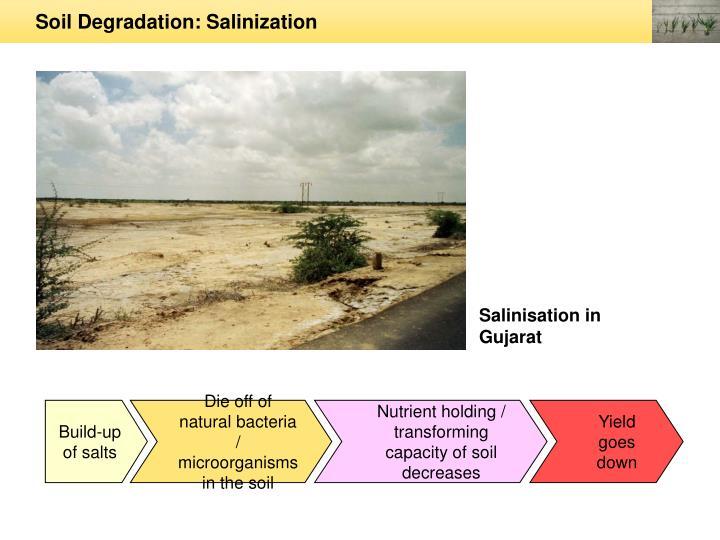 Soil Degradation: Salinization