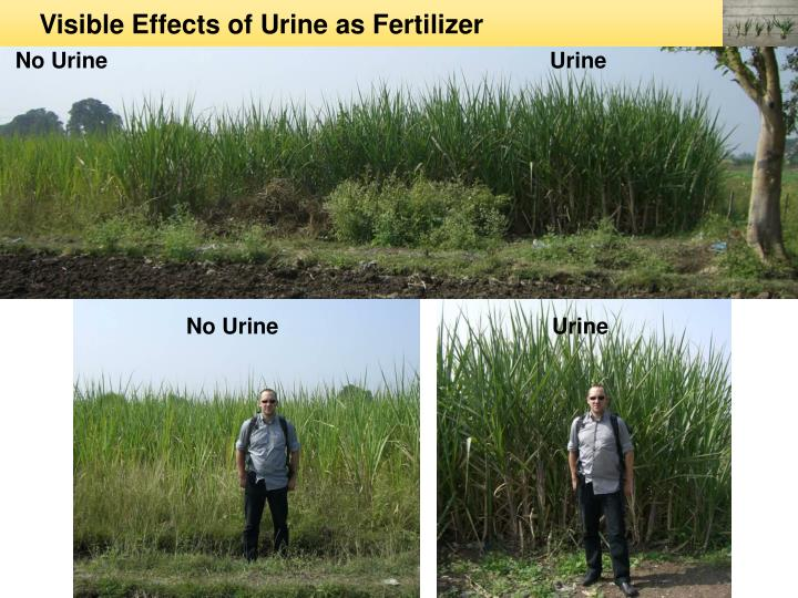 Visible Effects of Urine as Fertilizer