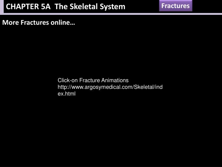 CHAPTER 5A  The Skeletal System