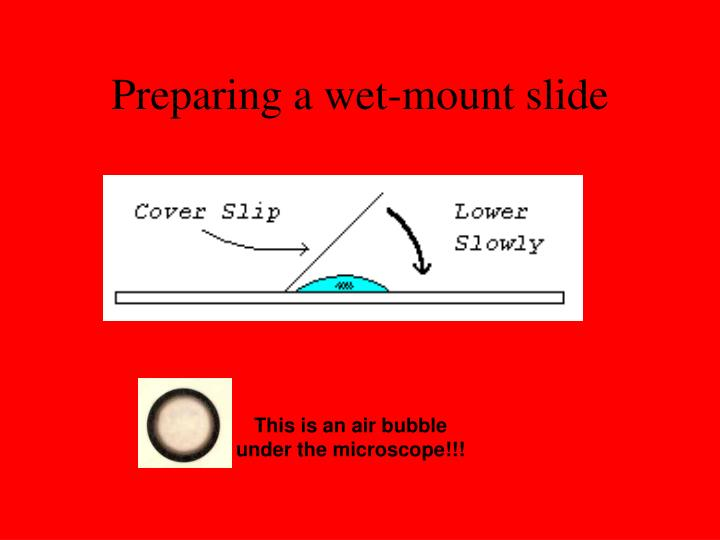 Preparing a wet-mount slide