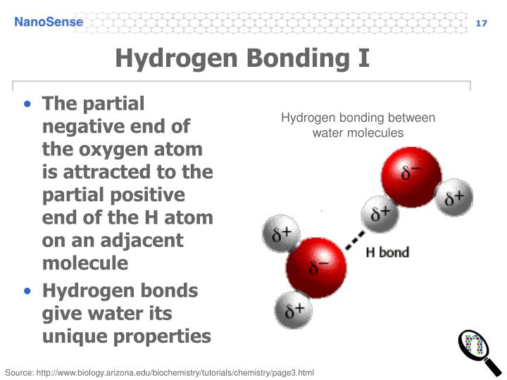 Hydrogen Bonding I