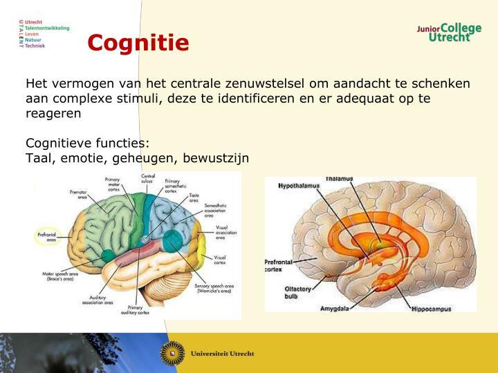 Cognitie