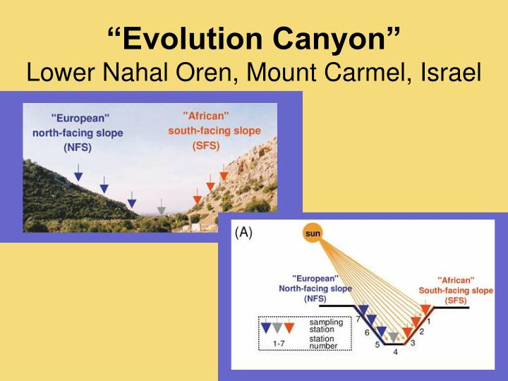 Evolution Canyon
