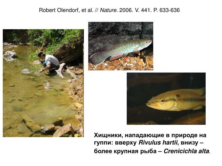 Robert Olendorf, et al. //