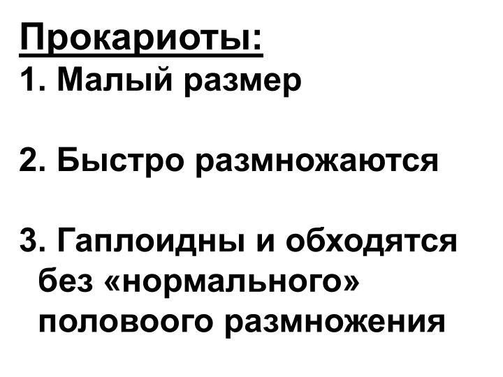 Прокариоты:
