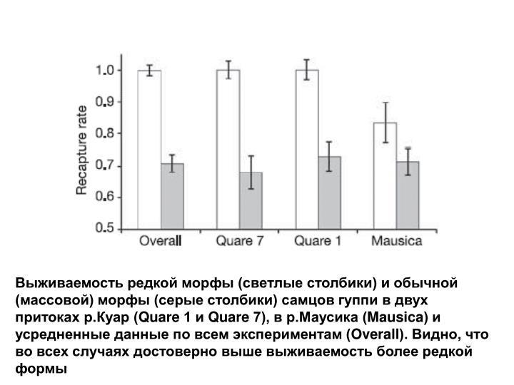 Выживаемость редкой морфы (светлые столбики) и обычной (массовой) морфы (серые столбики) самцов гуппи в двух притоках р.Куар (