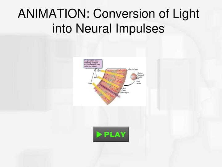ANIMATION: Conversion of Light into Neural Impulses