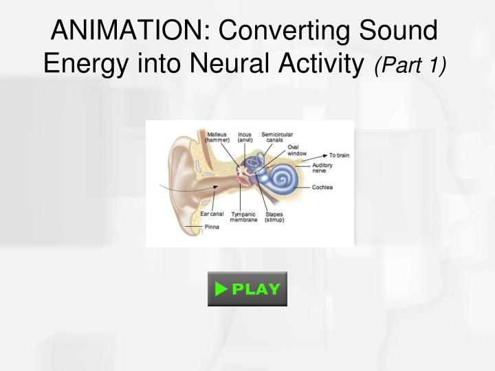 ANIMATION: Converting Sound Energy into Neural Activity