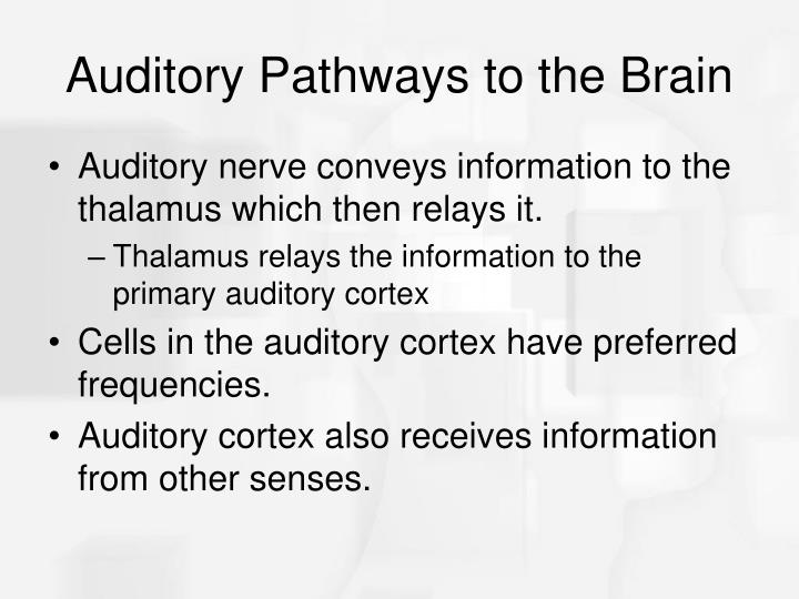 Auditory Pathways to the Brain