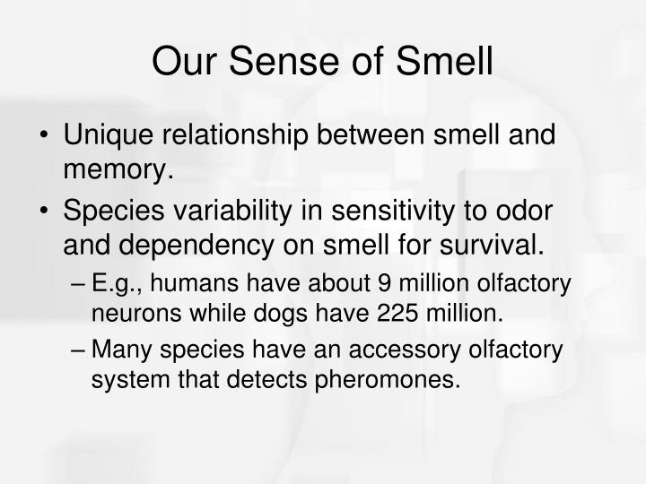 Our Sense of Smell