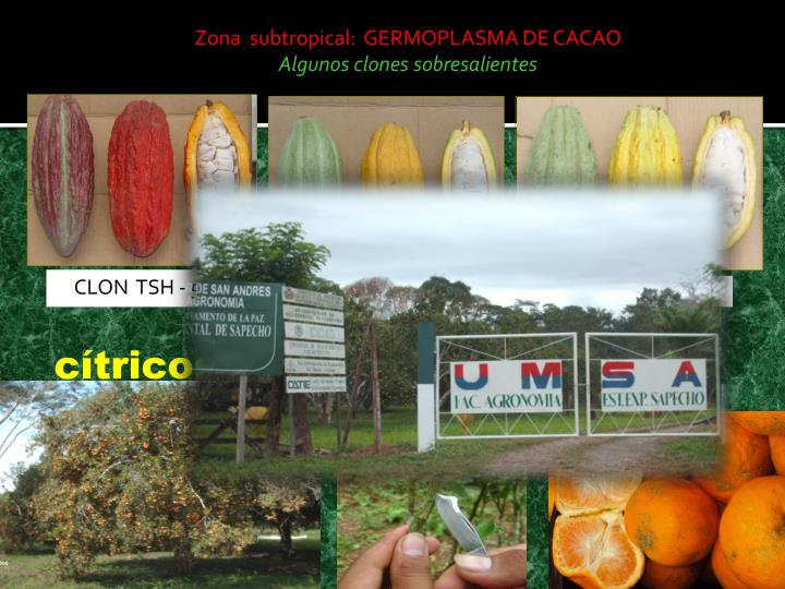 Zona  subtropical:  GERMOPLASMA