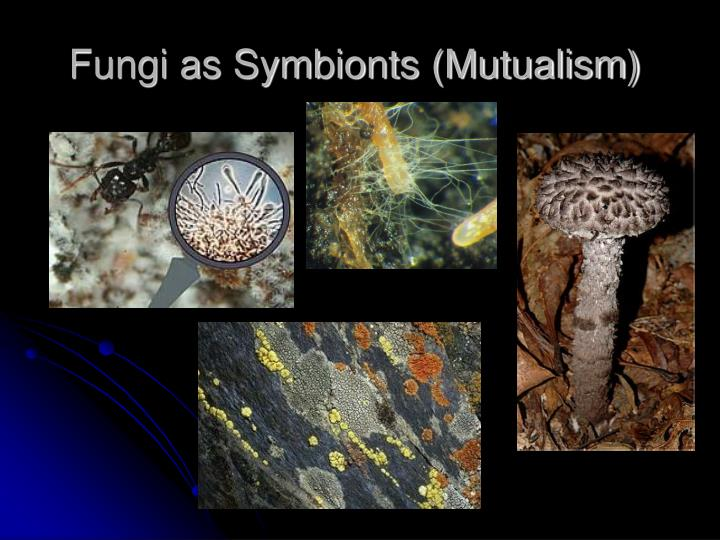 Fungi as Symbionts (Mutualism)
