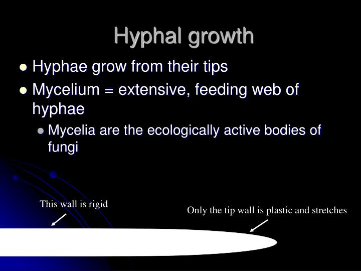 Hyphal growth