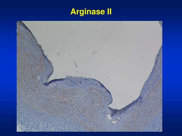 Arginase II