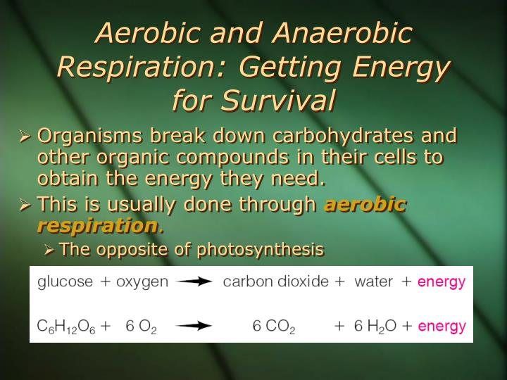 Aerobic and Anaerobic Respiration: Getting Energy for Survival