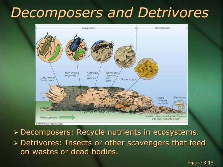 Decomposers and Detrivores