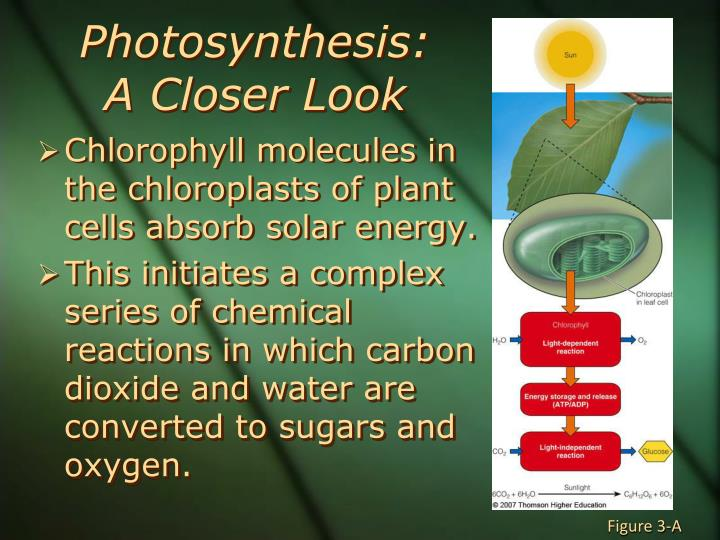 Photosynthesis: