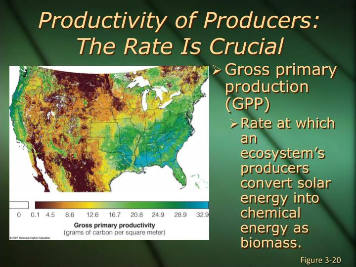 Productivity of Producers: