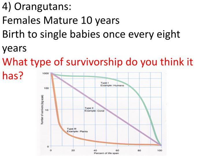4) Orangutans: