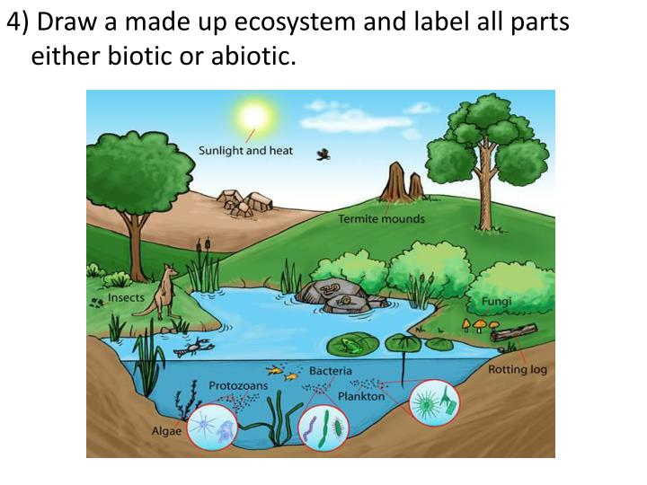 4) Draw a made up ecosystem and label all parts either biotic or