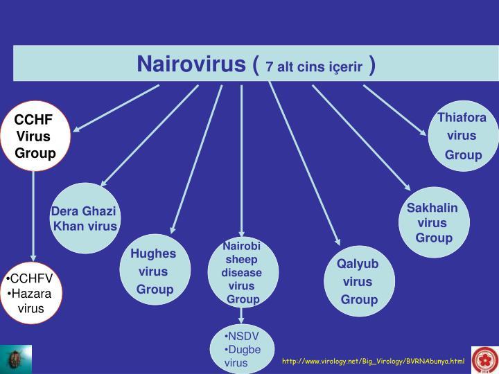 Nairovirus (