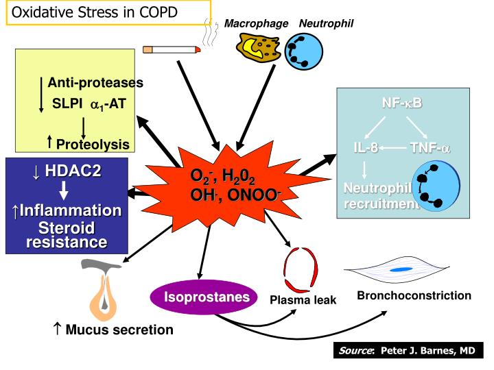 Oxidative Stress in COPD