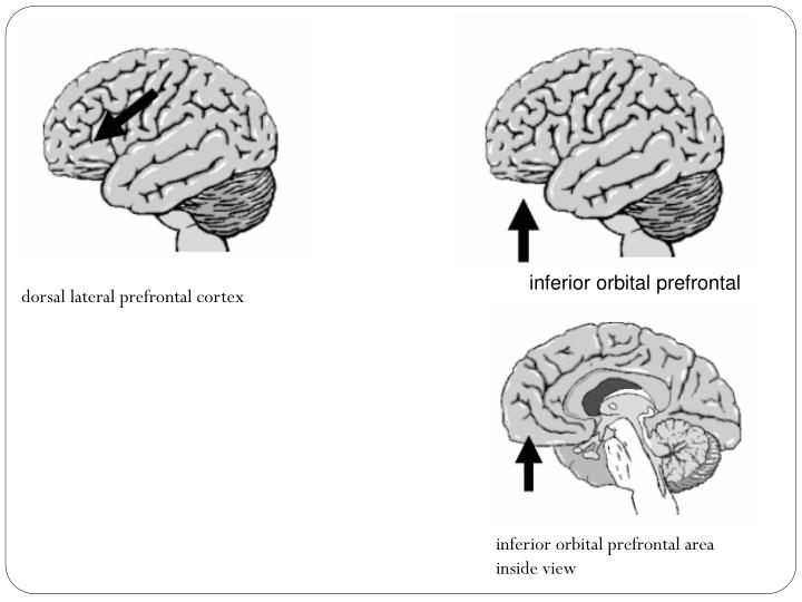 inferior orbital prefrontal