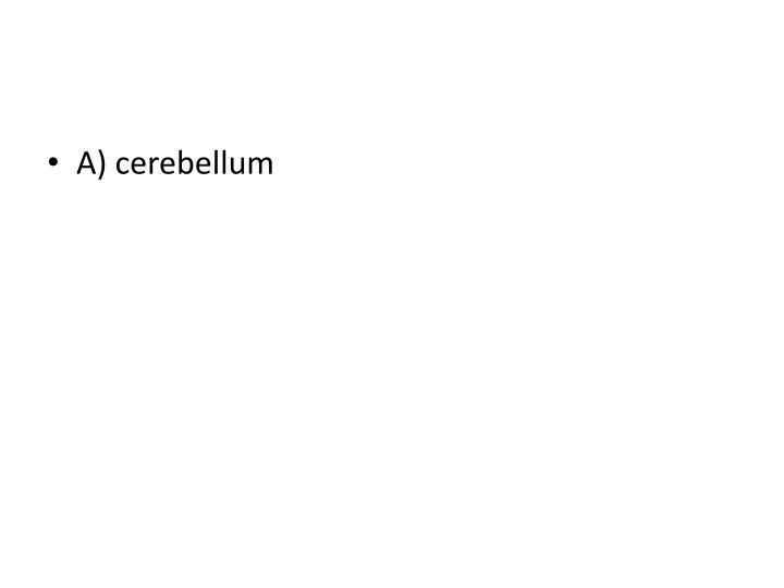 A) cerebellum