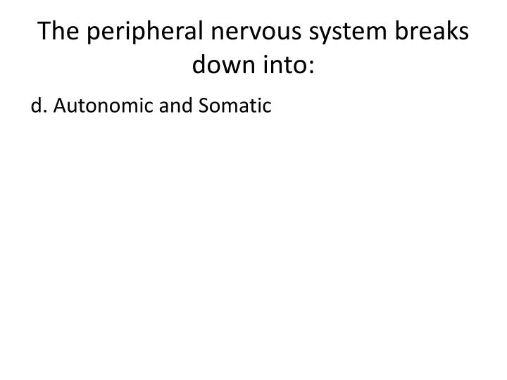 The peripheral nervous system breaks down into: