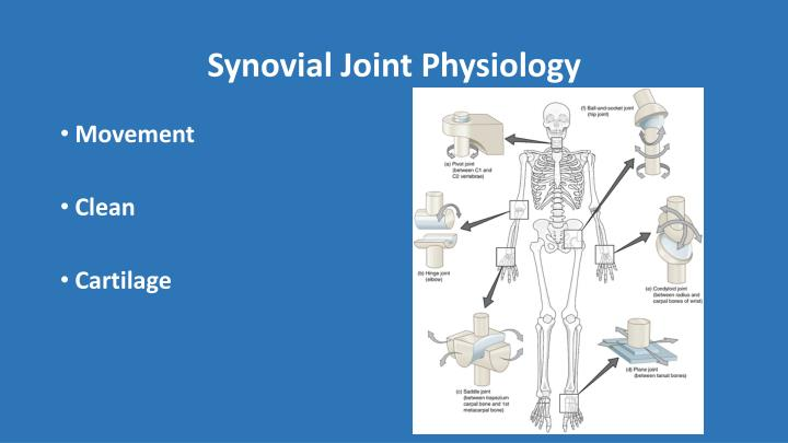 Synovial Joint Physiology