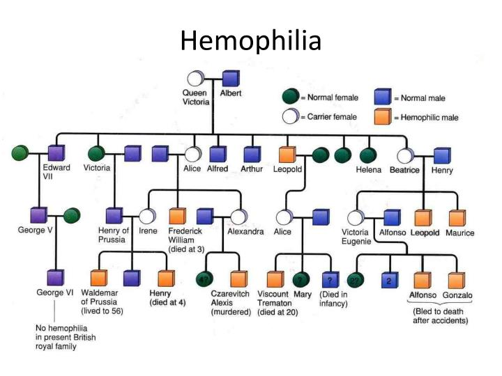 a study of hemophilia a sex linked disease A preliminary study of age and sex of people  sex 1 introduction hemophilia, an x-linked genetic blood disorder that  hemophilia is x-linked recessive disease.