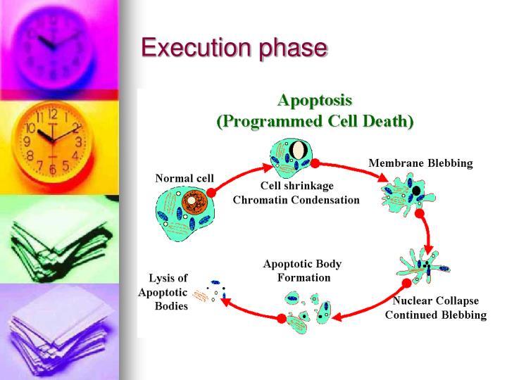 Execution phase