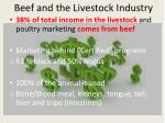 beef and the livestock industry