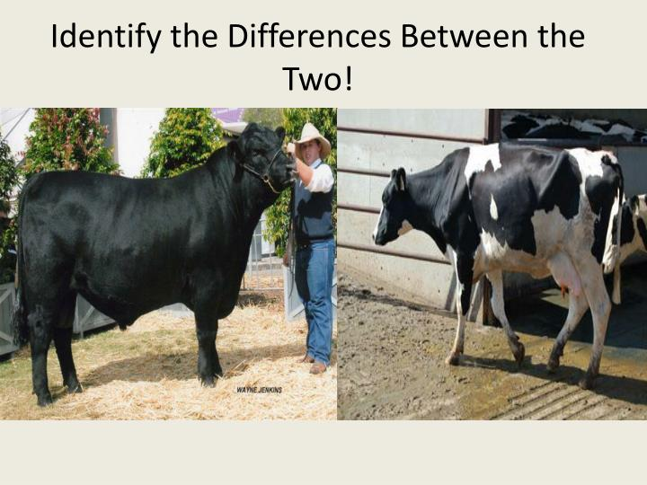 Identify the Differences Between the Two!