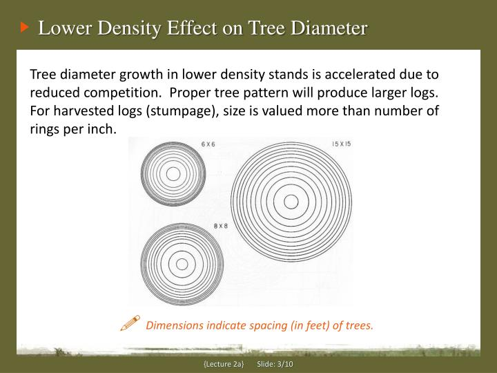 Lower Density Effect on Tree Diameter