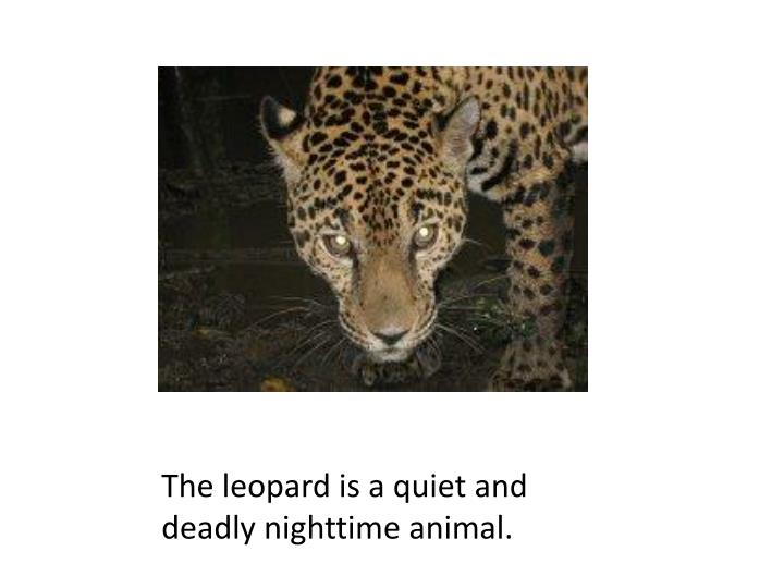 The leopard is a quiet and deadly nighttime animal.